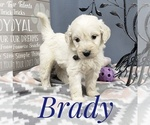 Image preview for Ad Listing. Nickname: Brady