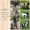 German Shorthaired Pointer Puppy For Sale in BLUEFIELD, VA, USA