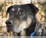Small #10 German Shepherd Dog Mix