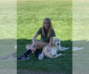 Golden Retriever Puppy for Sale in SANFORD, Colorado USA