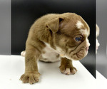 Small #4 Bulldog