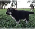 Small #38 German Shepherd Dog