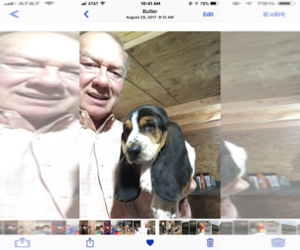 Father of the Basset Hound puppies born on 04/15/2019