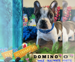 Image preview for Ad Listing. Nickname: DOMINO
