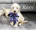 Image preview for Ad Listing. Nickname: Roxy
