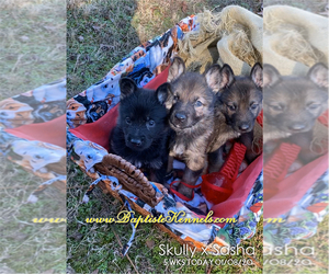 German Shepherd Dog Puppy for Sale in GRIFFIN, Georgia USA