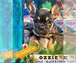 Image preview for Ad Listing. Nickname: OZZIE