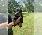 Image preview for Ad Listing. Nickname: ROTTY PUPS