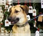 Small #392 German Shepherd Dog Mix