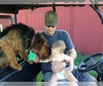 Small #3 Airedale Terrier
