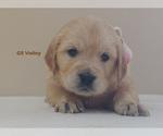 Small #2 Golden Retriever