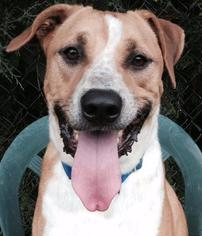 Neo - Hound Dog For Adoption