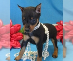 Miniature Pinscher Puppy for sale in FOYIL, OK, USA