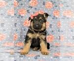 Small #1 German Shepherd Dog