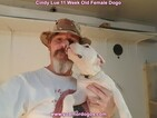 Small Photo #127 Dogo Argentino Puppy For Sale in PINEVILLE, MO, USA