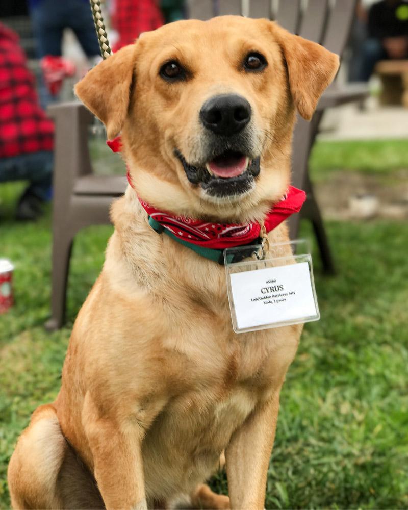 Free Dog Adoption San Diego