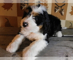Image preview for Ad Listing. Nickname: Bentley