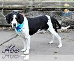 Small #11 Coonhound