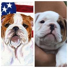 Bulldog Puppy For Sale in CRANSTON, RI