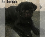 Image preview for Ad Listing. Nickname: Ben-Reduced