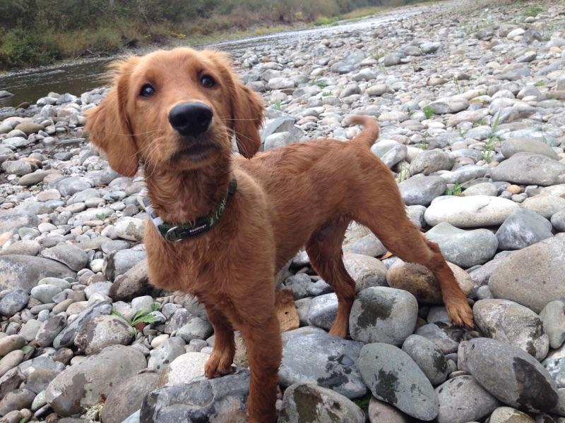 Search And Rescue Dogs Georgia