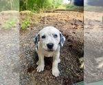 Small #6 Bernese Mountain Dog Mix