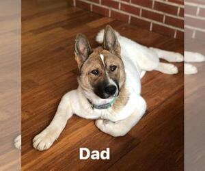 Father of the Akita puppies born on 05/06/2019