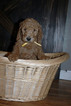 Goldendoodle Puppy For Sale in GEORGETOWN, IN, USA
