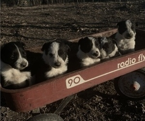 Border Collie Puppy for sale in AVA, MO, USA