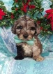 Goldendoodle-Poodle (Miniature) Mix Puppy For Sale in EDEN, PA, USA