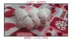 Coton de Tulear Puppy For Sale in SAN JOSE, CA