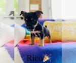 Small Photo #3 Chorkie Puppy For Sale in COOKEVILLE, TN, USA