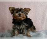 Image preview for Ad Listing. Nickname: Claire - AKC