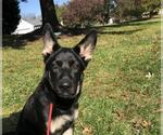 Small #418 German Shepherd Dog Mix