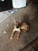 German Shepherd Dog-Unknown Mix Dog For Adoption in NEWNAN, GA, USA