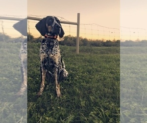 Father of the Bluetick Coonhound puppies born on 10/07/2020