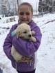 Golden Retriever Puppy For Sale in JONESVILLE, NC, USA