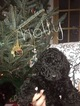Small Photo #11 Poodle (Standard) Puppy For Sale in TRYON, NC, USA