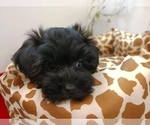 Small #3 Poodle (Toy)