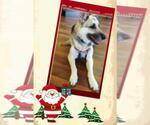 Small #238 German Shepherd Dog
