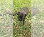 Small #4 Staffordshire Bull Terrier