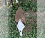 Puppy 0 Border Collie