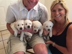 Labrador Retriever Puppy For Sale in BRANDON, FL, USA