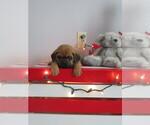 Puppy 2 Puggle