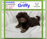 Image preview for Ad Listing. Nickname: Griffy