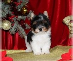 Image preview for Ad Listing. Nickname: Puppy#1
