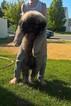 Caucasian Shepherd Dog Puppy For Sale in KUNA, ID, USA