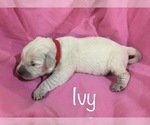 Image preview for Ad Listing. Nickname: Ivy