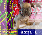 Image preview for Ad Listing. Nickname: AXEL