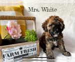 Puppy 4 Goldendoodle-Woodle Mix